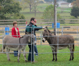 Family time with the donkeys